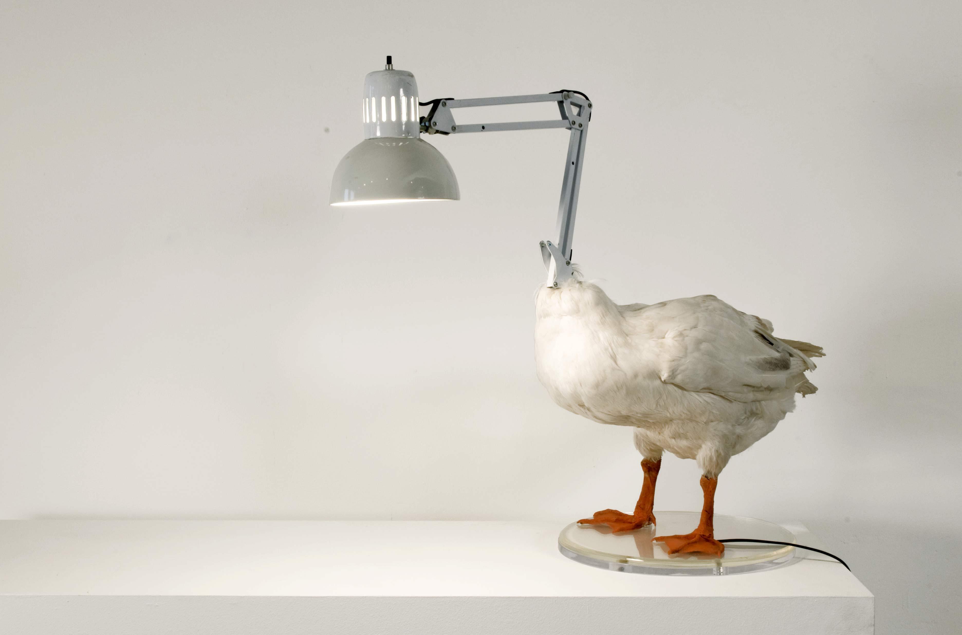 Mátame, camión! (El Tópic de la Taxidermia Chunga) - Página 4 Duck-lamp-2