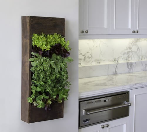 629544 0 8 3520 contemporary kitchen Add Greenery to Your Interior Space Using Vertical Gardens