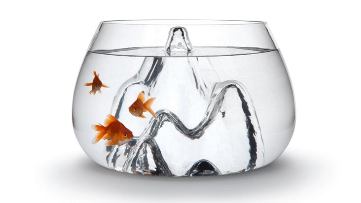fishbowl_new_1