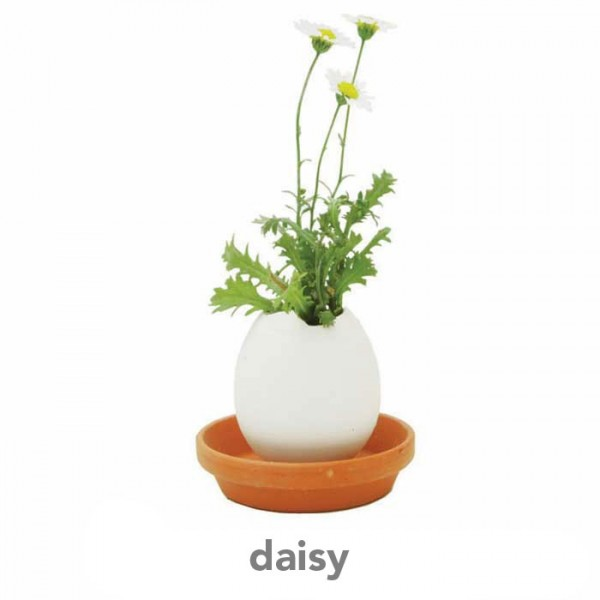 daisy 2 600x600 Eggling   Crack n GROW FLOWERS