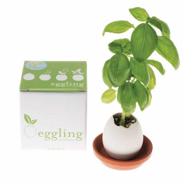 eggling box 600x600 Eggling   Crack n GROW FLOWERS