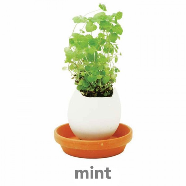 mint 1 600x600 Eggling   Crack n GROW FLOWERS