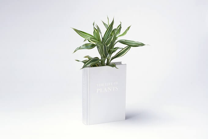 Creative and Unconventional Way to Display Your Plants by YOY Design