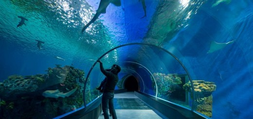The-Blue-Planet-Aquarium