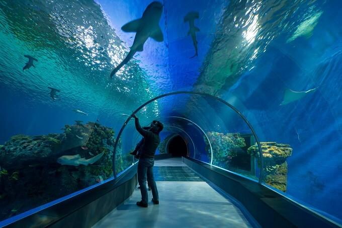 The-Blue-Planet-Aquarium