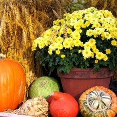 Fall Decorating Ideas for Your Garden