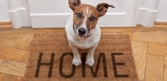 Befriend Your Home and your Pet