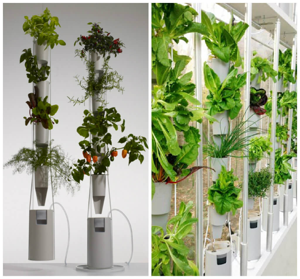 5 Factors to Consider to Set Up an Indoor Garden – Interior Design Design News and Architecture
