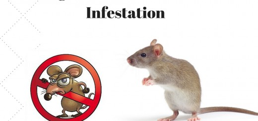 3 Signs You Have a Rodent Infestation