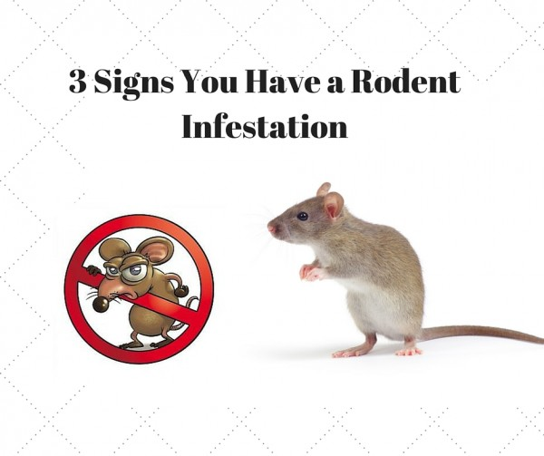 3 Signs You Have a Rodent Infestation – Interior Design ...