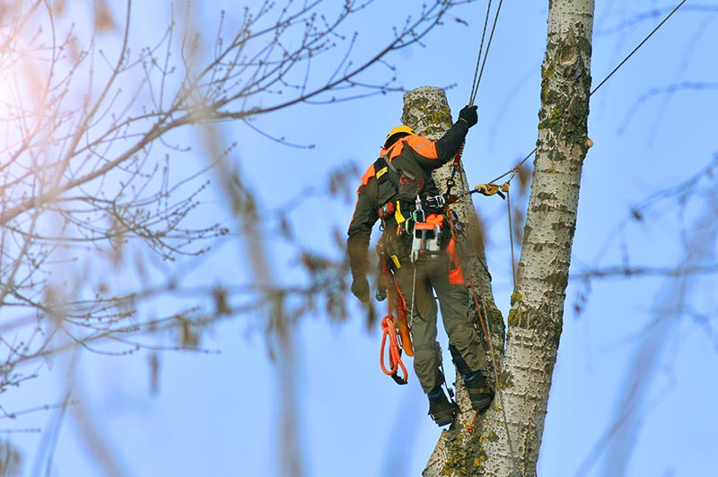 Tree Service, The Next Large Point!
