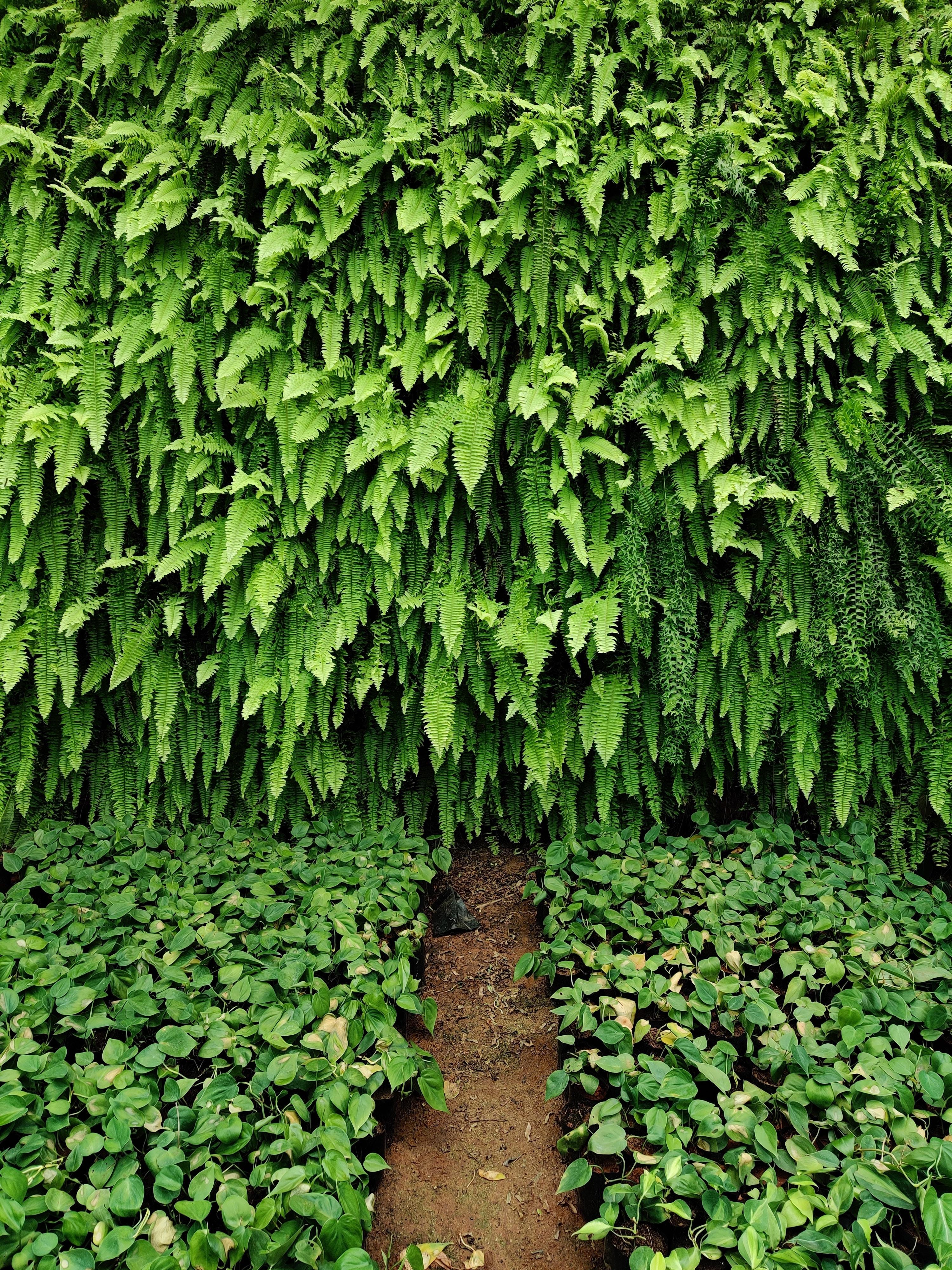 Plant Wall - Ferns. Vertical Garden
